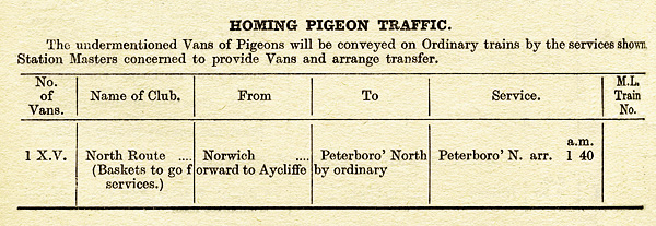 Pigeons from Norwich